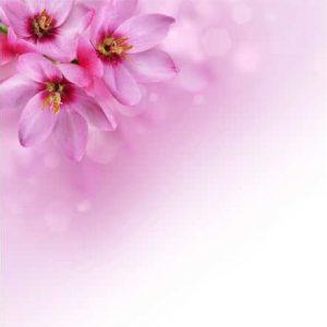 Фотообои Цветы и капли