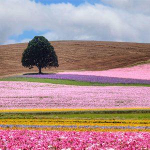 Фотообои цветные луга