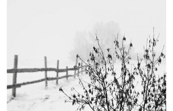Фотообои снежная изгородь