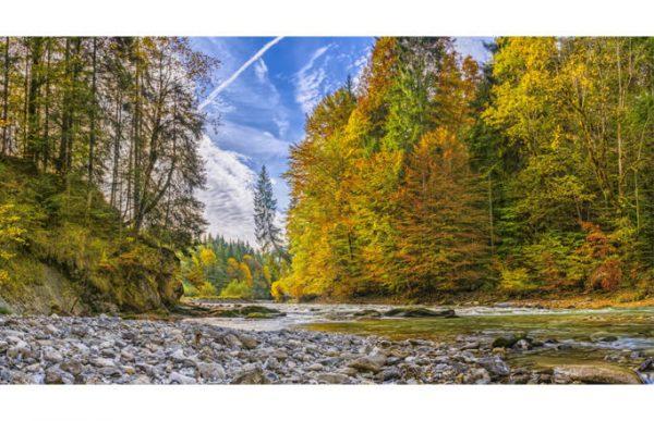 Фотообои Лесная река