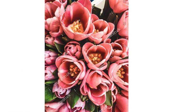 Фотообои Раскрывшиеся тюльпаны