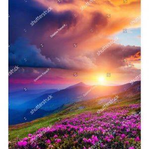 Фотообои Цветы на горном лугу